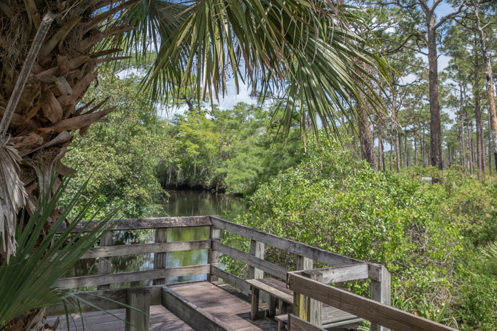 Take a Hike at Jonathan Dickinson State Park