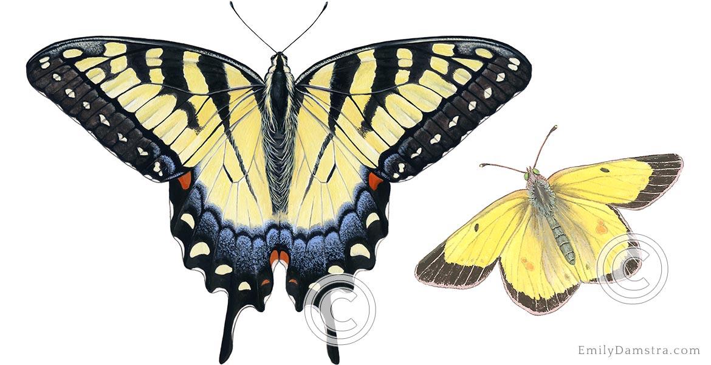 damstra_home_slider_butterflies