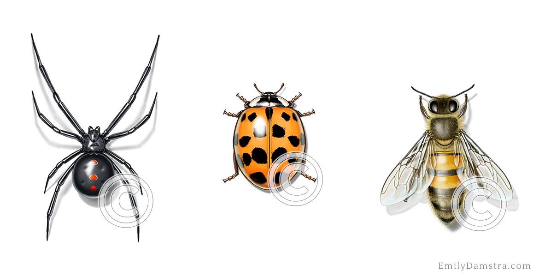 damstra_home_slider_spider_beetle_bee