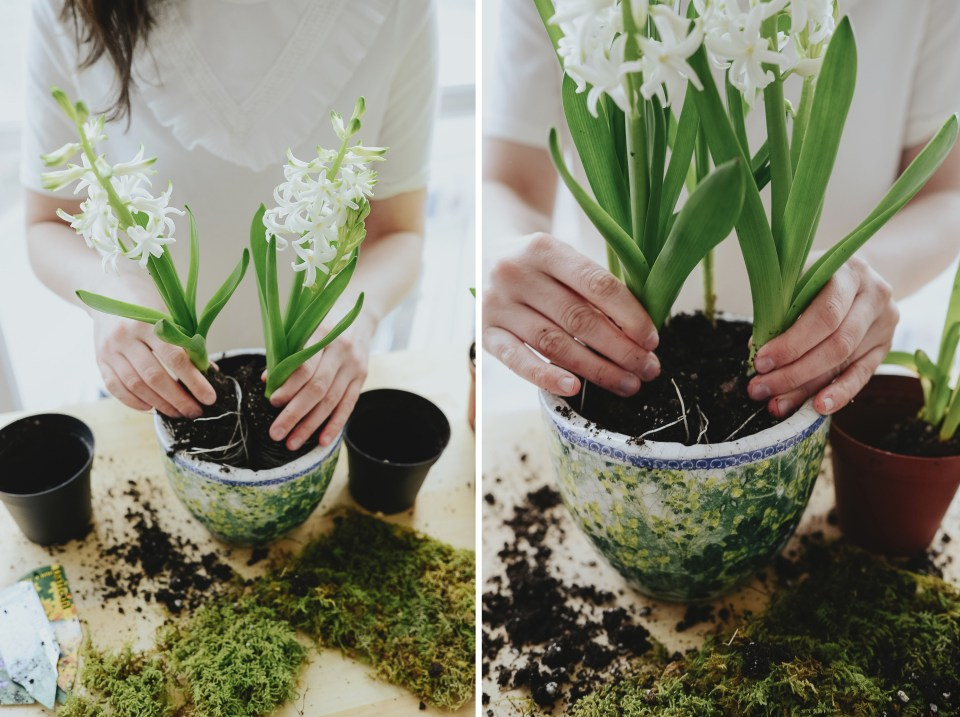 anthropologie-planter-arrangement-3 copy