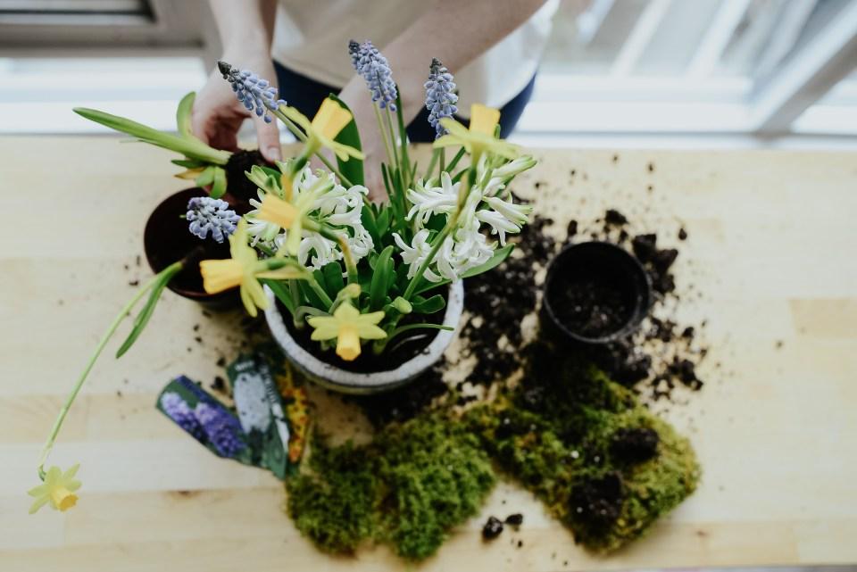 anthropologie-planter-arrangement-7