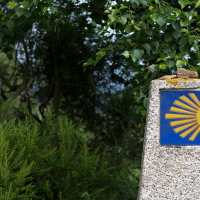 These yellow scallop shells mark the trail of the Camino