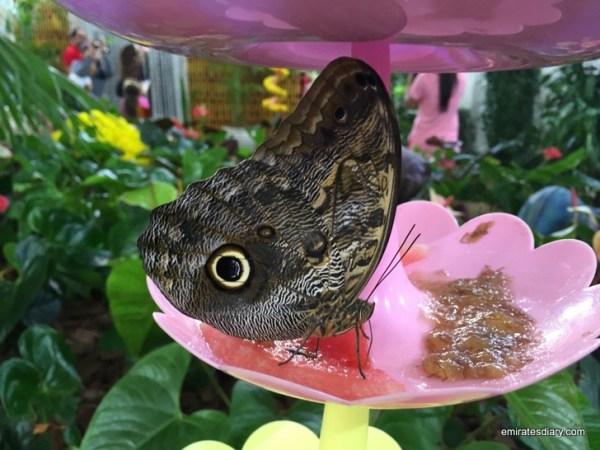 24-butterfly-garden-dubai-pictures-2015-emiratesdiary-024