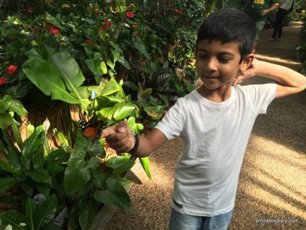 80-butterfly-garden-dubai-pictures-2015-emiratesdiary-080