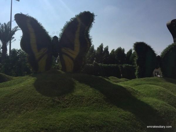96-butterfly-garden-dubai-pictures-2015-emiratesdiary-096