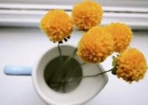 pom flower dandelions