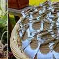 seed-favors-for-weddings-let-love-grow
