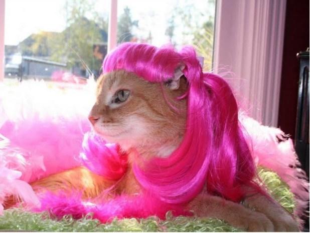 peluca_gato