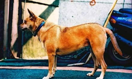 Guarded dog – Kodak EKTACHROME E100VS (120)