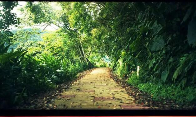 Walk your path – Kodak Portra 400 (120)
