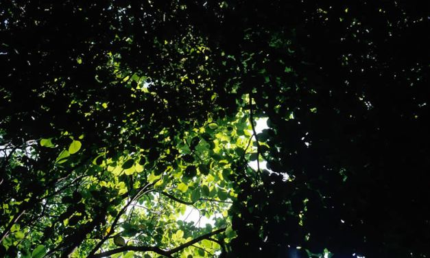 Emerald canopy – Shot on Fuji Velvia 50 RVP50 (35mm)