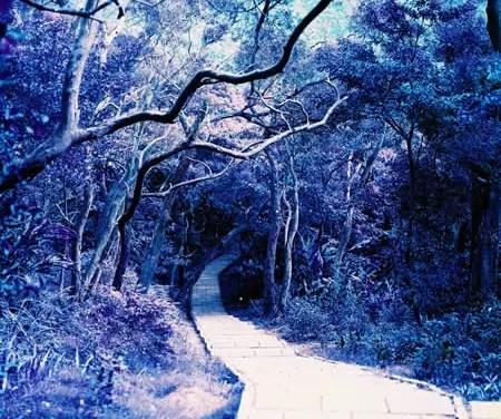 Enchantment – LomoChrome Purple XR 100-400 (120)