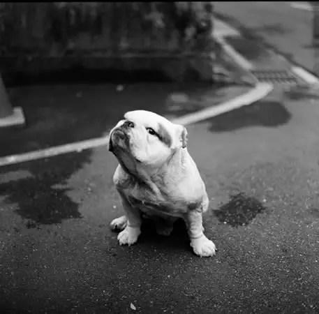 Urdhva mukha śvānāsana / upward facing dog – Kodak T-MAX 400 (120)