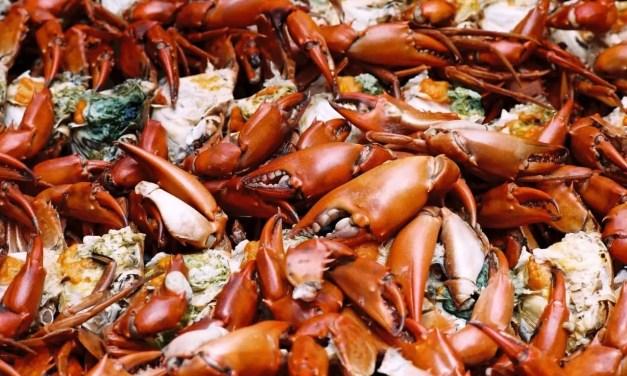 Crabby bunch – Agfa Vista 200 (35mm)
