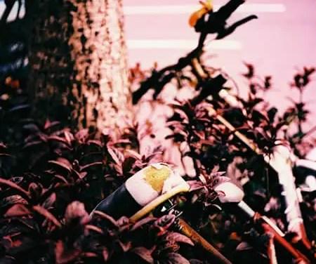 In the pink – Fuji Velvia 100 RVP100 (120)