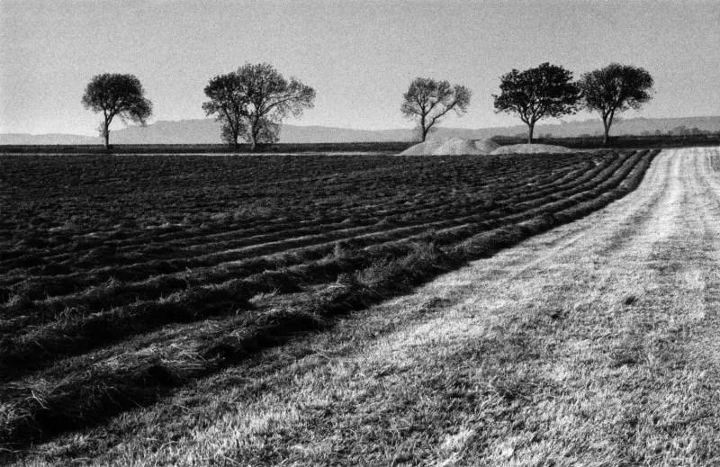 Harvest time, West Lothian Canon EF, Ilford FP4