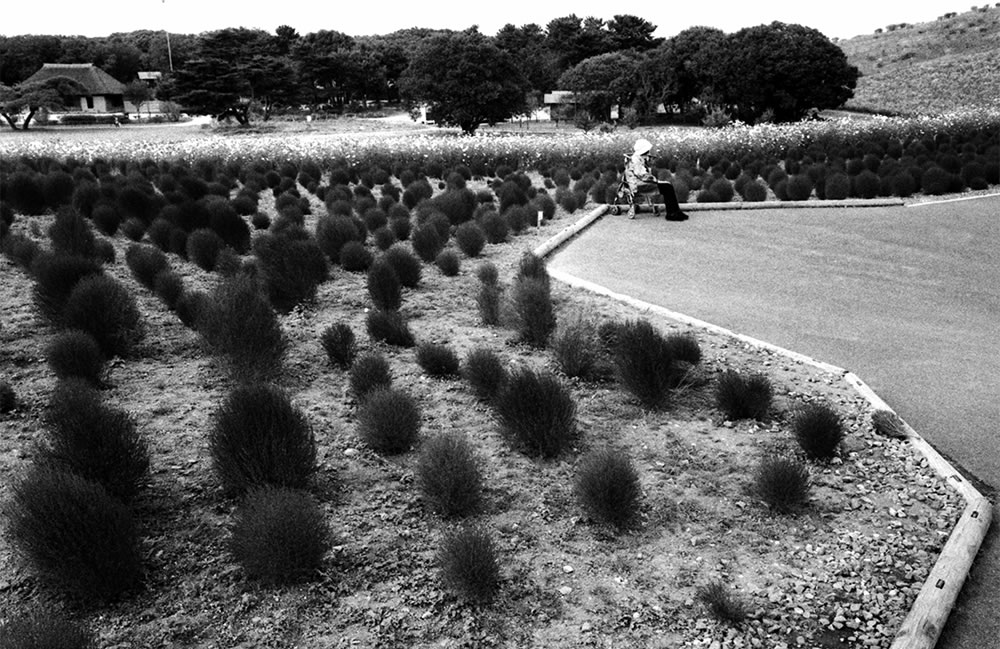 A lady resting amongst Kochia, Japan - Leica M6 / 28mm Elmarit / Ilford HP5+ / Ilford HC