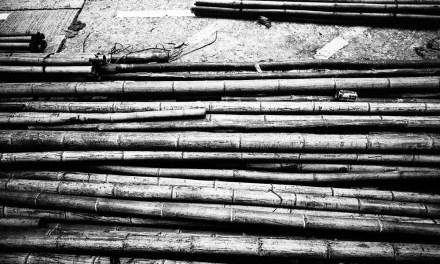 Bamboozled – Eastman Double-X 5222 (35mm)