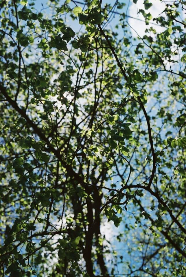 """""""Light & Shade"""" Leiston Abbey, Leiston, May 2015 - Lomography Colour Negative 400/ Canon EOS3/ Canon 24-105 EFL"""