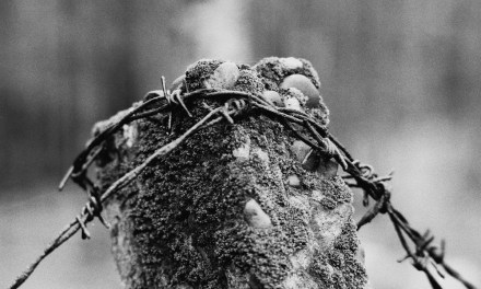 Bound – Eastman Double-X 5222 (35mm)