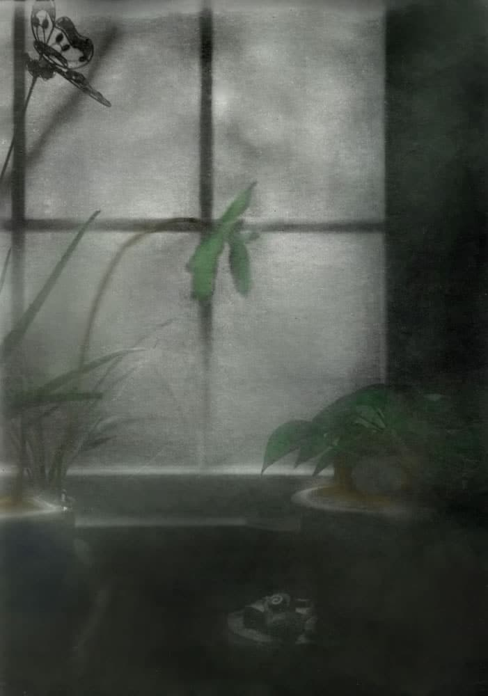Tinted Retina Plants in Window - John Nanian