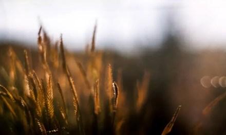 Oregon Sunset – Kodak Portra 400VC (120)