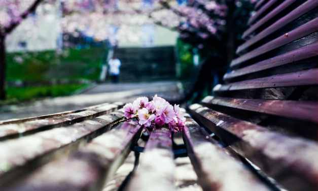 An expired love affair aka why I shoot expired film – by Sina Farhat