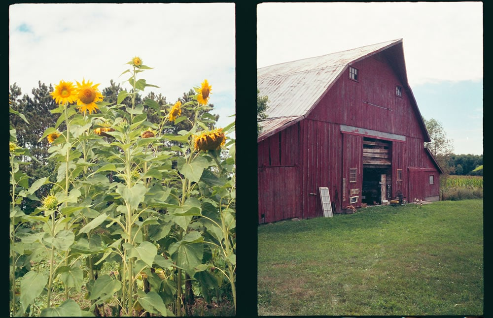 Sunflowers and barn, Olympus Pen EE3, Agfa 200, West Michigan