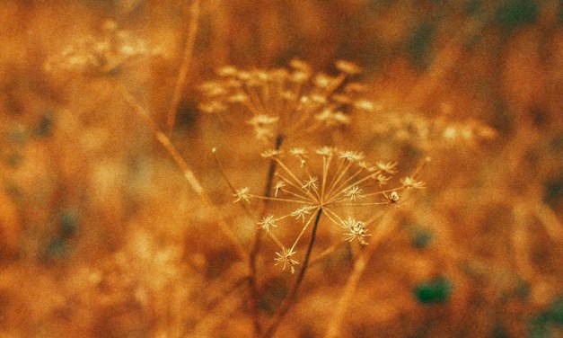 Making and experimenting with homemade redscale film – Agfa Vista Plus 200
