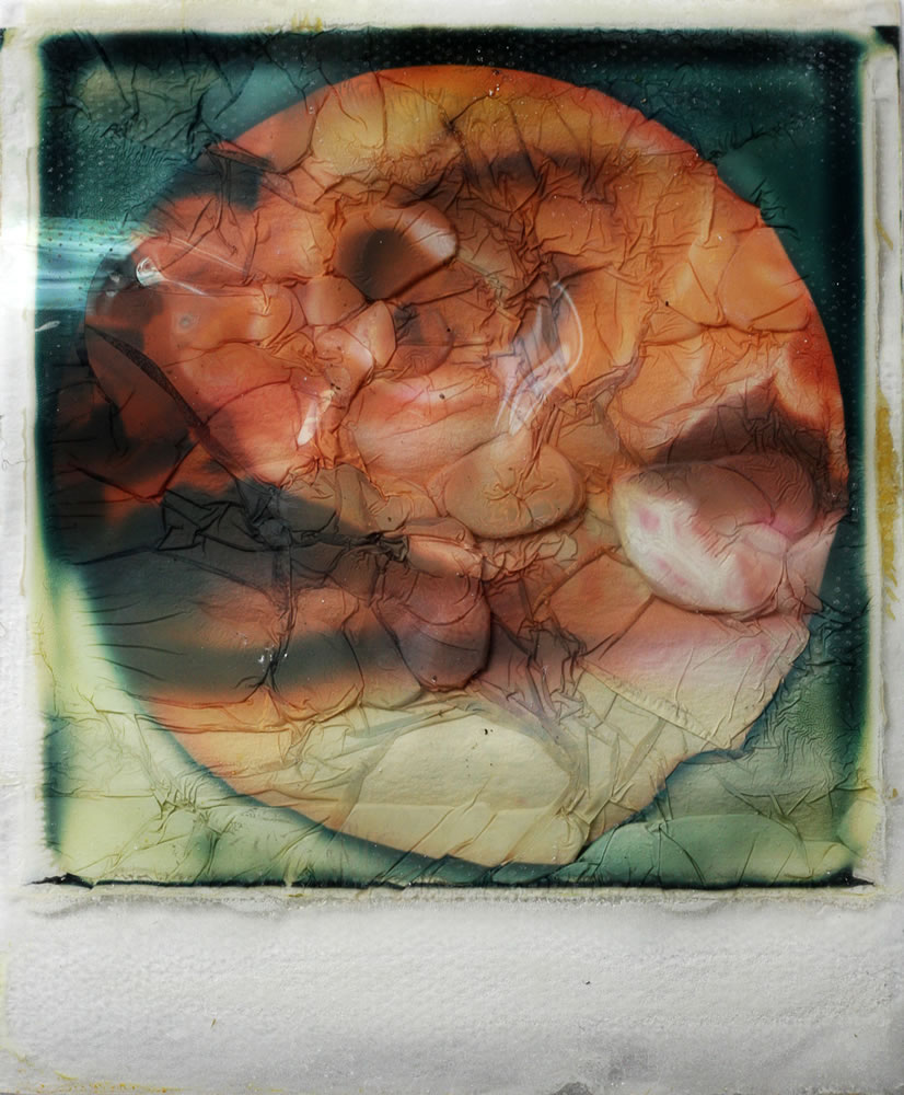 Roses - Polaroid SX70 on Impossible SX70