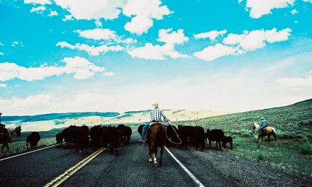 Road hogs – Agfa Precisa CT 100 (35mm)