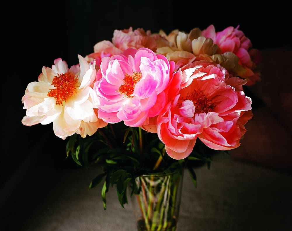 Peonies for my Wife - Graflex Speed Graphic 4x5, Kodak Ektar 100