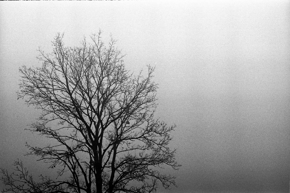 Fomapan 400 shot at EI 320 - Rodinal stand
