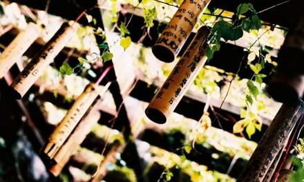 Prayer vines – Kodak PROFESSIONAL ELITE Chrome 100 – EB-3 (35mm)