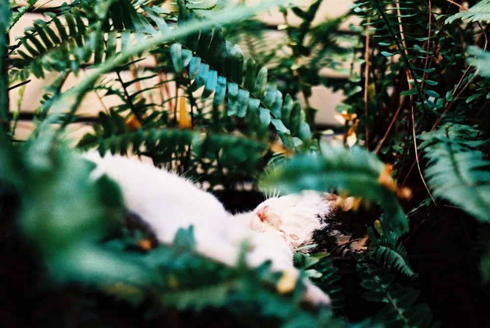 Slumber - Shot on Kodak PROFESSIONAL ELITE Chrome 100 (EB-3) at EI 100. Color reversal (slide) film in 35mm format. Cross processed.