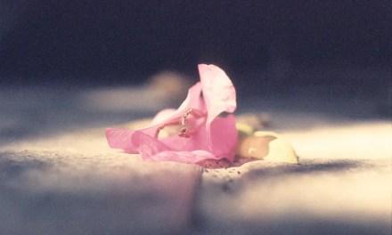 Fallen bougainvillea #01 + #02 – Rollei Vario Chrome (35mm)