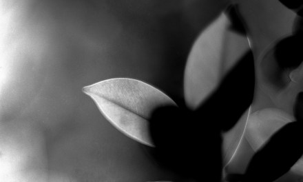 In vein – Fomapan 200 Creative (4×5)