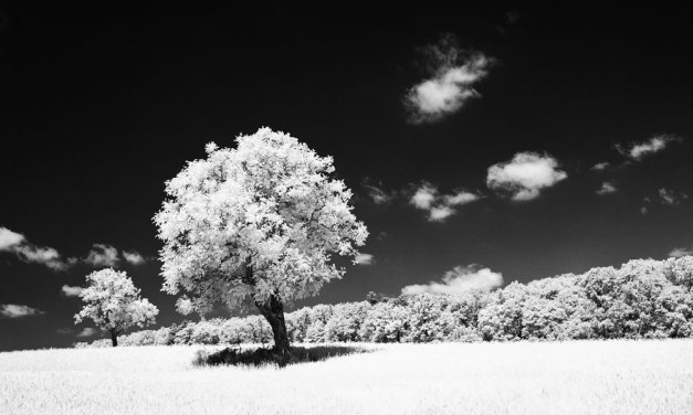 Film Review: Rollei Infrared 400 – by Christopher Schmidtke
