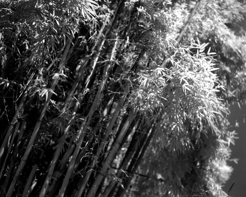 To the light - Shot on Rollei IR 400 at EI 12 - Black and white negative film in 4x5 format - AEROgraphic - Kodak Anastigmat 161mm f/4.5.