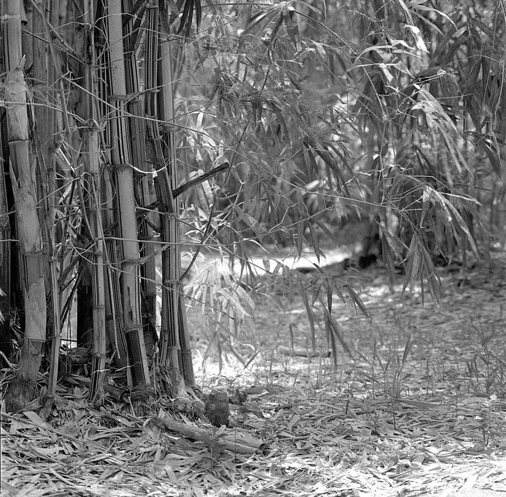 The way through - Shot on Bergger Pancro 400 at EI 200. Black and white negative film in 120 format as 6x6. Orange 21 filter, Hasselblad Planar F 80 F/2.8, Pyrocat-HD 1:2:100