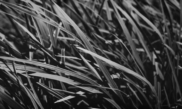 Blades – Shot on FILM Ferrania FERRANIA P30 Alpha (35mm)