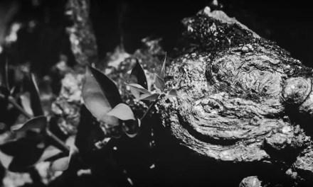 Stumped – Shot on FILM Ferrania FERRANIA P30 Alpha (35mm)