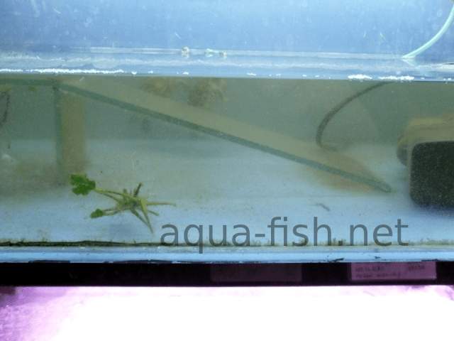 How to deal with cloudy water in aquariums