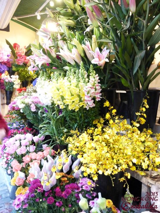 Ena HK2 6 Roses