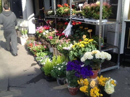 Ena London Flower