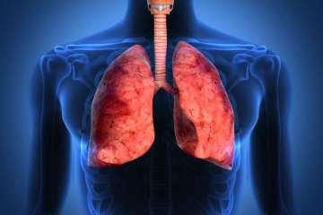 πνεύμονες αναπνευστικό ανατομία