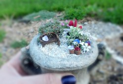 Small Of Micro Mini Fairy Garden