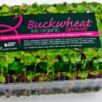 Live Buckwheat Sprouts
