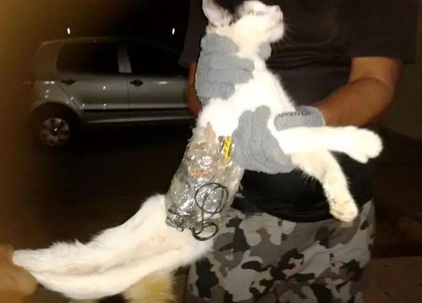 gato carcel