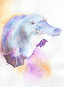 2013 11 04 Watercolour platypuddlingpuss